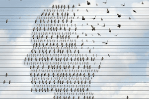 Birds in the shape of a persons head